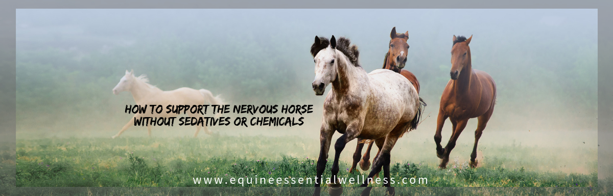 How to Support the Nervous Horse without Sedatives or Chemicals