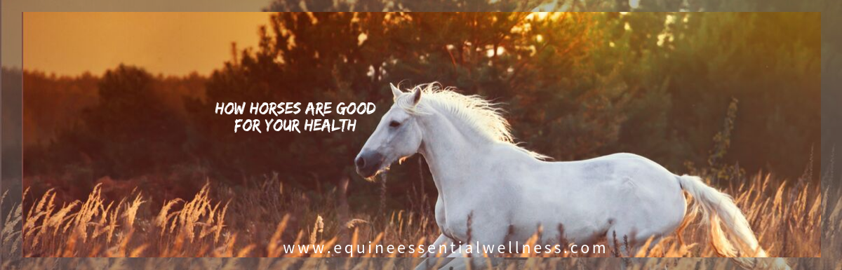 How Horses are good for your health