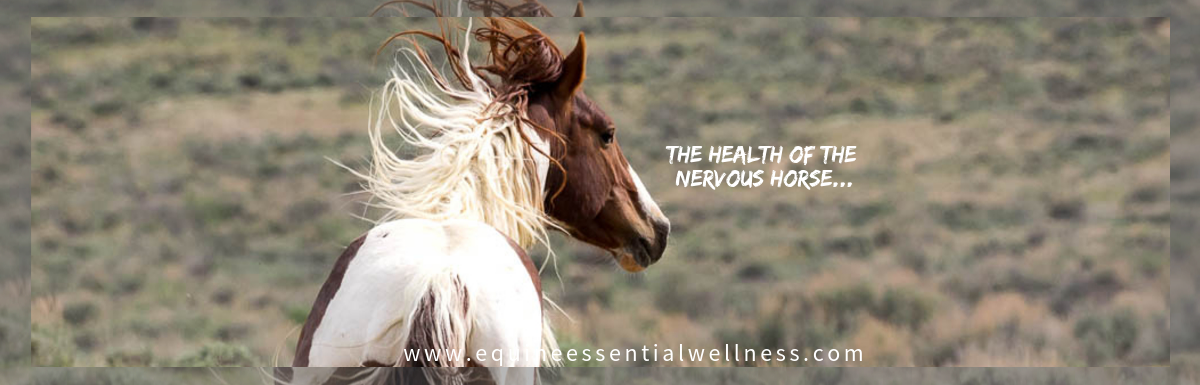 The health of the nervous horse...