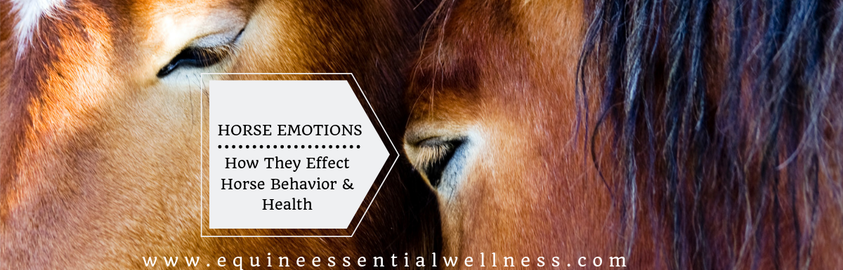 Horse Emotions How They Effect Horse Behavior & Health