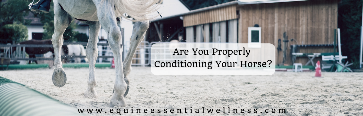 Are You Properly Conditioning Your Horse