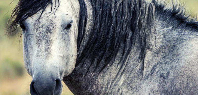 Equine Metabolic Concerns