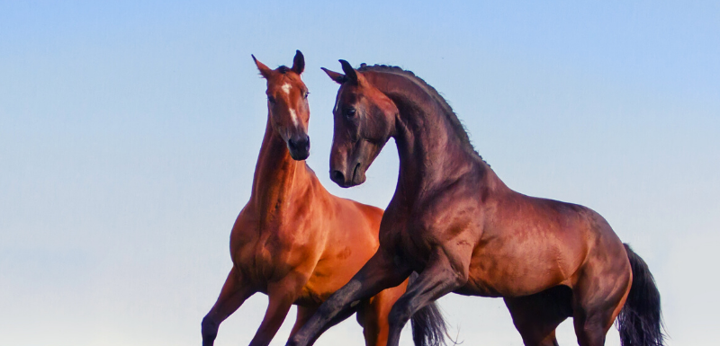 liver health for horses